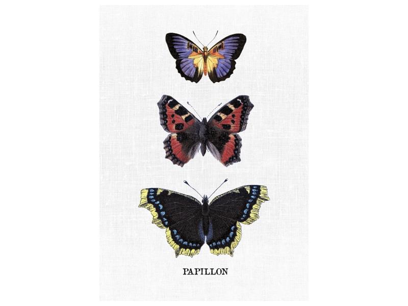 bild leinwand keilrahmen papillon 1 geschenk wandbild. Black Bedroom Furniture Sets. Home Design Ideas